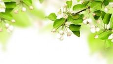 zielone-roslinki-zdrowie